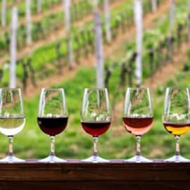 Top Wine Educators in America